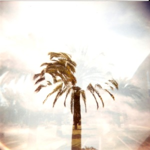 san fran palm